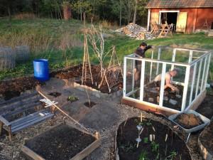 Johan och Henrik planterar i köksträdgården