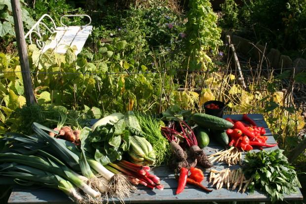Grönsaker direkt från trädgårdslandet